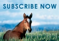 Subscribe to the Australian Stud Book Web Site